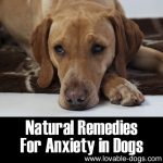 Natural Remedies For Anxiety In Dogs