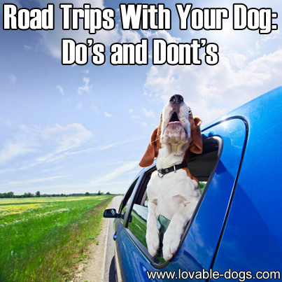 Road Trips With Your Dog -  Dos and Donts