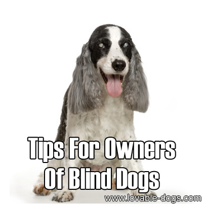 Tips For Owners Of Blind Dogs