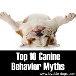 Top 10 Canine Behavior Myths