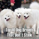 Top 10 Dog Breeds That Don't Stink