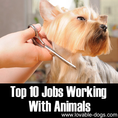 Top 10 Jobs Working With Animals
