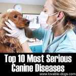 Top 10 Most Serious Canine Diseases