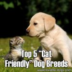 Top 5 Cat-Friendly Dogs