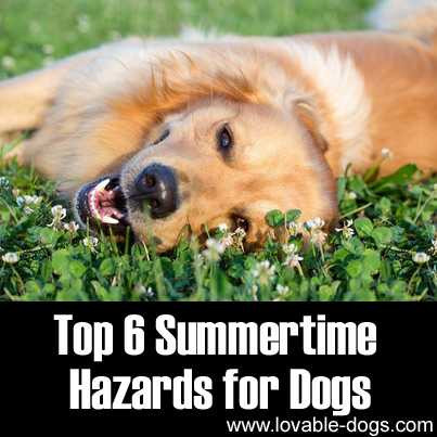 Top 6 Summertime Hazards for Dogs