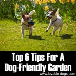 Top 6 Tips For A Dog Friendly Garden