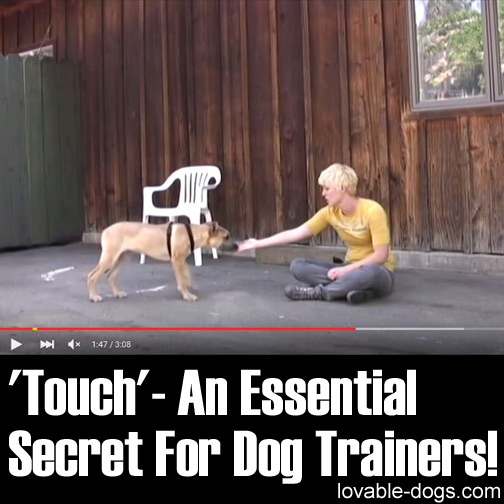'Touch' - An Essential Secret For Dog Trainers