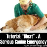 "Tutorial: ""Bloat"" – A Serious Canine Emergency"