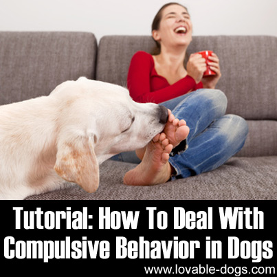 Lovable Dogs Tutorial: How To Deal With Compulsive ...