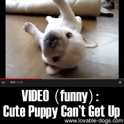 VIDEO- Cute Puppy Can't Get Up