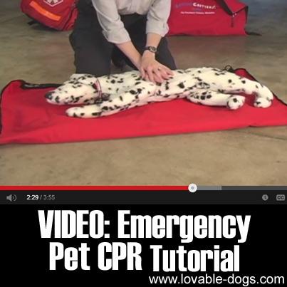 VIDEO- Emergency Pet CPR Tutorial