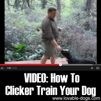 VIDEO- How To Clicker Train Your Dog