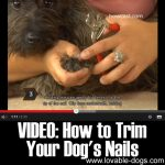 VIDEO: How to Trim Your Dog's Nails