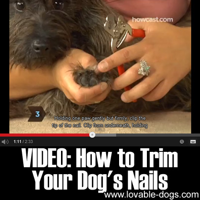 VIDEO- How to Trim your Dog's Nails