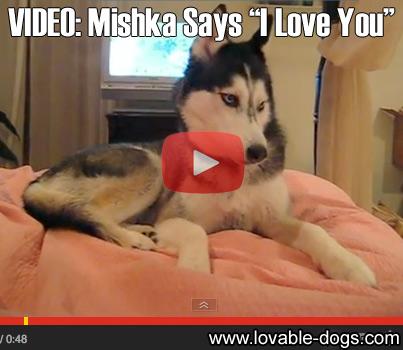 VIDEO - Mishka Says I Love You