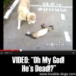 "VIDEO: ""Oh My God! He's Dead!?"""