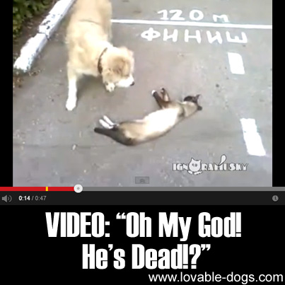 VIDEO - Oh My God He's Dead