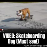 VIDEO: Skateboarding Dog