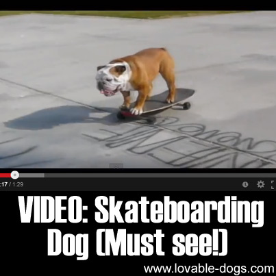 VIDEO - Skateboarding Dog