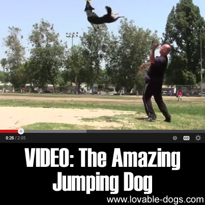 VIDEO- The Amazing Jumping Dog