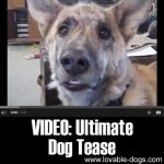 VIDEO: Ultimate Dog Tease