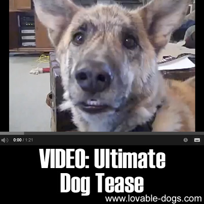 http://lovable-dogs.com/wp-content/uploads/2015/09/VIDEO-Ultimate-Dog-Tease.jpg