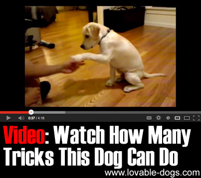 VIDEO - Watch How Many Tricks This Dog Can Do