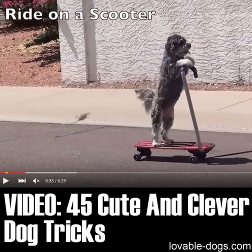 Video - 45 Cute And Clever Dog Tricks