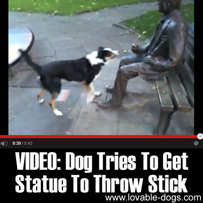 Video - Dog Tries To Get Statue To Throw Stick