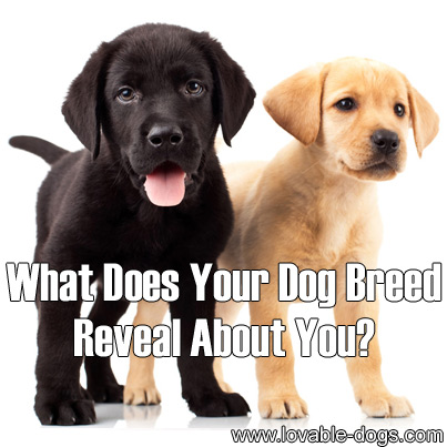 What Does Your Dog Breed Reveal About You