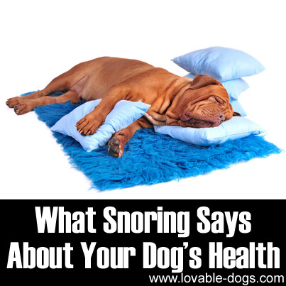 What Snoring Says About Your Dog's Health