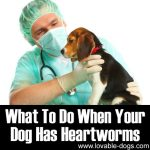 What To Do When Your Dog Has Heartworms
