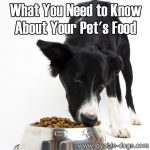 What You Need to Know About Your Pet's Food