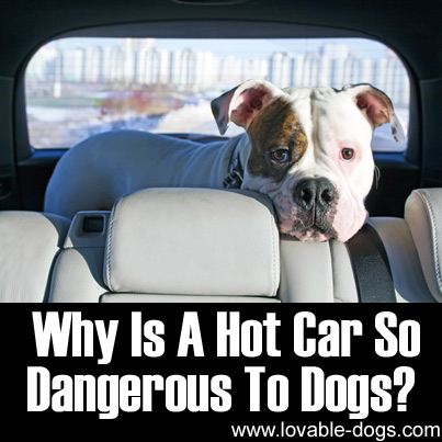Lovable Dogs Why Is A Hot Car So Dangerous To Dogs ...