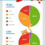 Is Your Pet Obese? Surprising Facts About Weight Gain In Pets