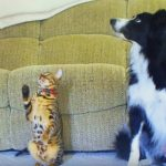 Cat vs. Dog – A Trick Contest