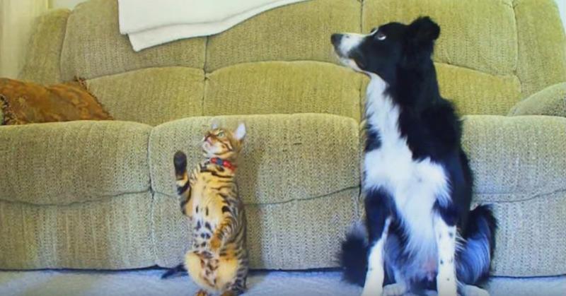 Cat vs Dog - A Trick Contest