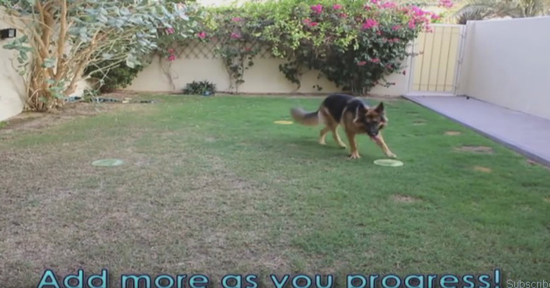 Dog Training Tutorial Off-leash (Send-Off)