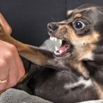 How To Train Your Dog Not To Be Aggressive