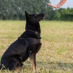 How To Win Your Dog's Loyalty And Good Behavior By Becoming The Pack Leader