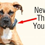 Why You Should NEVER Use A Shock Collar On Your Dog (And What To Do Instead)