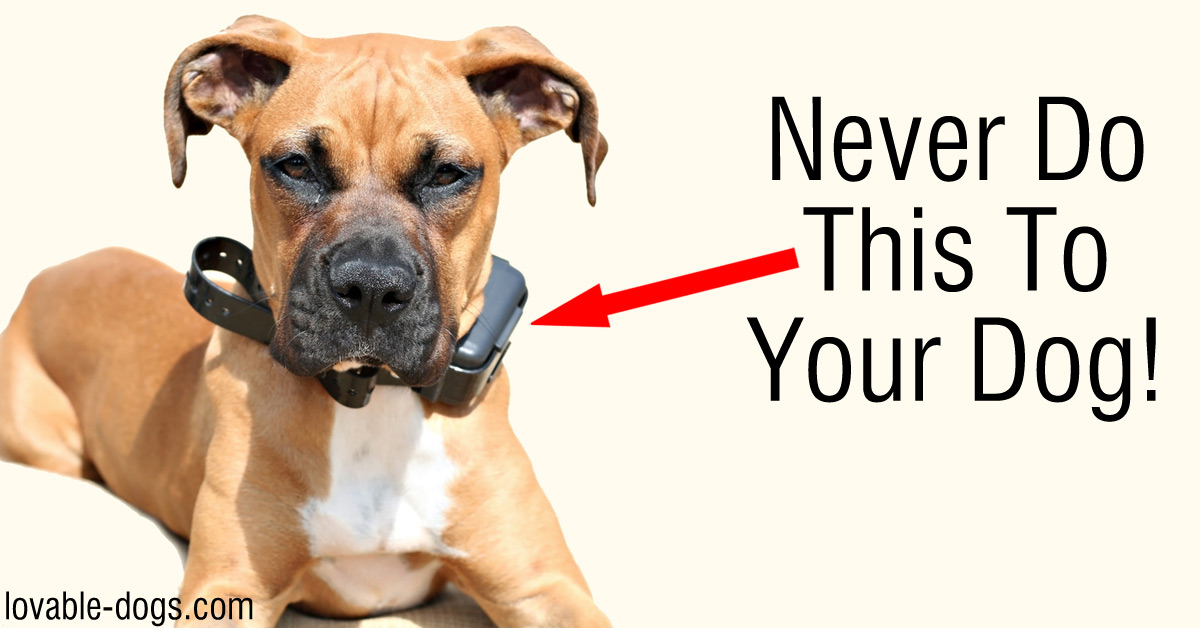 Why You Should NEVER Use A Shock Collar On Your Dog