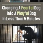 Changing A Fearful Dog Into A Playful Dog In Less Than 5 Minutes