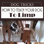 Dog Tricks – How To Teach Your Dog To Limp