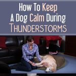 How To Keep A Dog Calm During Thunderstorms