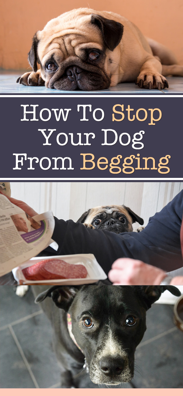 How To Stop Your Dog From Begging