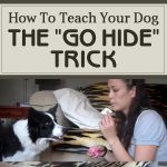 "How To Teach Your Dog The ""Go Hide"" Trick"
