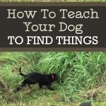 How To Teach Your Dog To Find Things