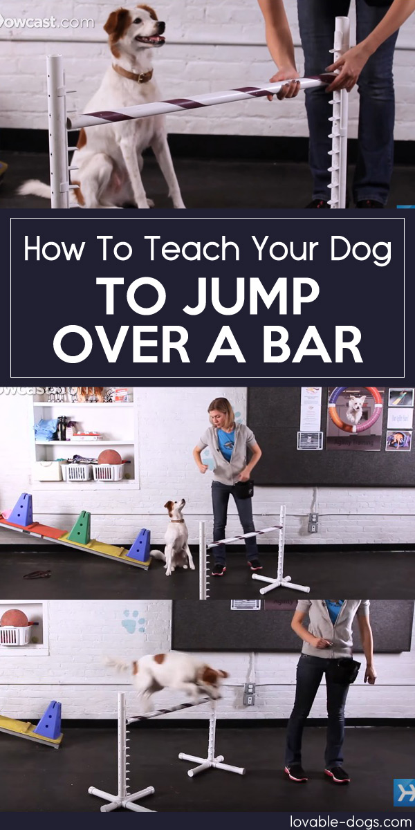 How To Teach Your Dog To Jump Over A Bar