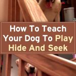 How To Teach Your Dog To Play Hide And Seek